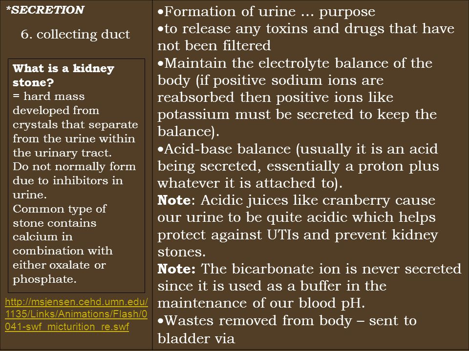 *SECRETION  Formation of urine … purpose  to release any toxins and drugs that have not been filtered  Maintain the electrolyte balance of the body (if positive sodium ions are reabsorbed then positive ions like potassium must be secreted to keep the balance).
