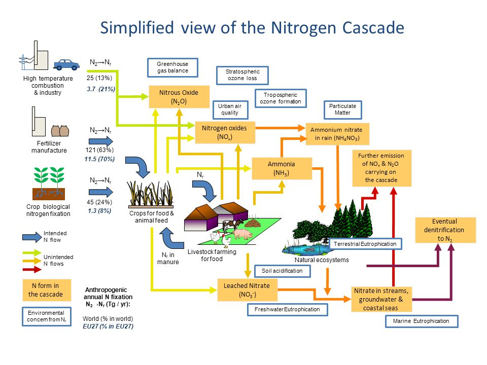 Nitrogen oxides (NO x ) Nitrous Oxide (N 2 O) Ammonia (NH 3 ) Leached Nitrate (NO 3 - ) Further emission of NO x & N 2 O carrying on the cascade Natural ecosystems Ammonium nitrate in rain (NH 4 NO 3 ) Nitrate in streams, groundwater & coastal seas High temperature combustion & industry NrNr Livestock farming for food N r in manure Eventual denitrification to N 2 Simplified view of the Nitrogen Cascade Unintended N flows N form in the cascade Terrestrial Eutrophication Freshwater Eutrophication Greenhouse gas balance Particulate Matter Tropospheric ozone formation Stratospheric ozone loss Soil acidification Urban air quality Marine Eutrophication Environmental concern from N r 25 (13%) N 2 →N r 121 (63%) 45 (24%) N 2 →N r Anthropogenic annual N fixation N 2 →N r (Tg / yr): World (% in world) 3.7 (21%) 1.3 (8%) 11.5 (70%) EU27 (% in EU27) Fertilizer manufacture Crops for food & animal feed Crop biological nitrogen fixation Intended N flow