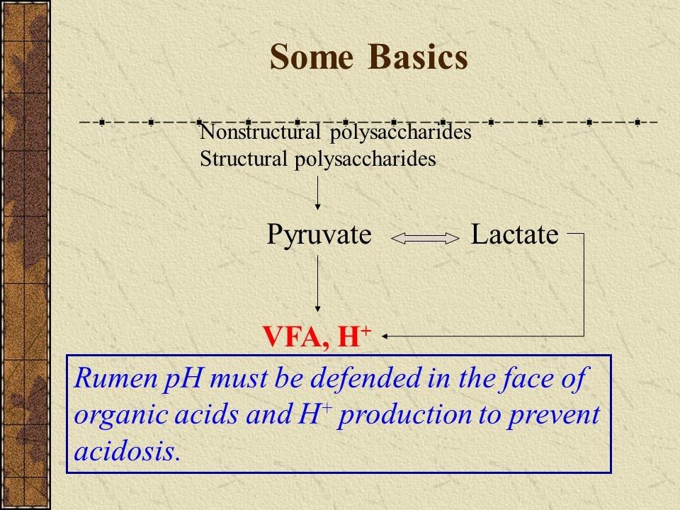 Some Basics Nonstructural polysaccharides Structural polysaccharides VFA, H + PyruvateLactate Rumen pH must be defended in the face of organic acids a