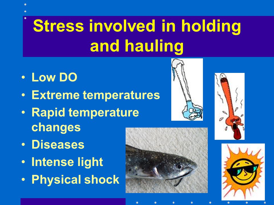 Stress involved in holding and hauling Low DO Extreme temperatures Rapid temperature changes Diseases Intense light Physical shock
