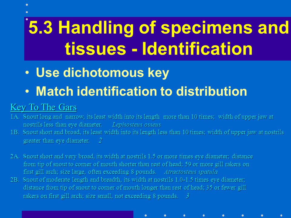 5.3 Handling of specimens and tissues - Identification Use dichotomous key Match identification to distribution Key To The Gars 1A. Snout long and nar