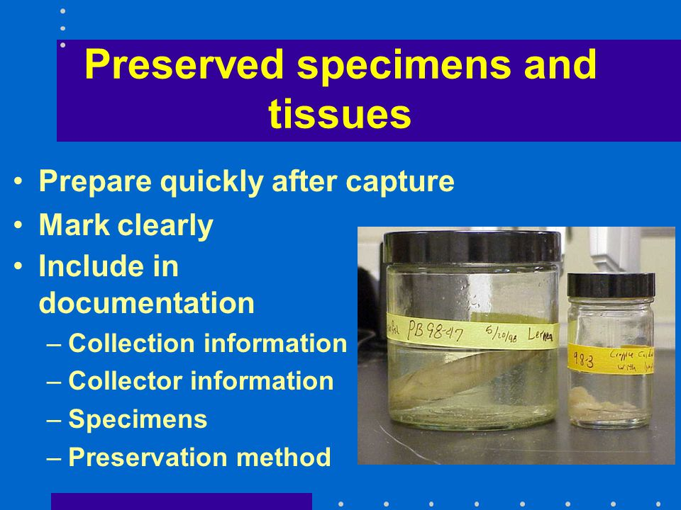 Preserved specimens and tissues Prepare quickly after capture Mark clearly Include in documentation –Collection information –Collector information –Sp