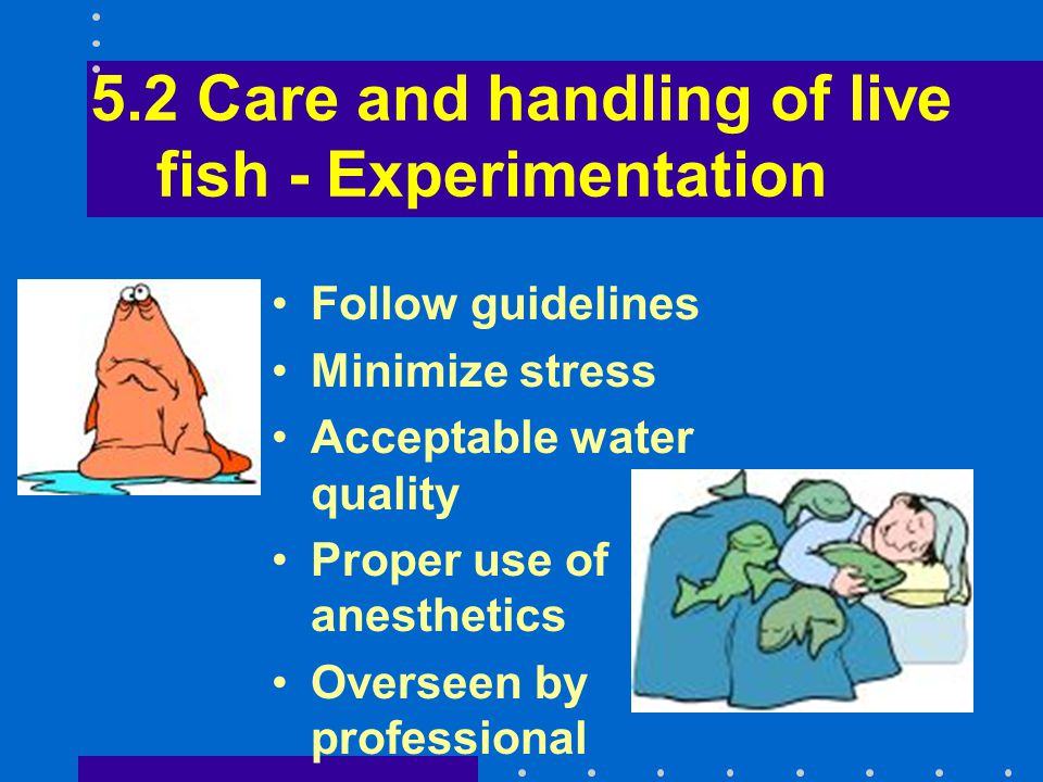 5.2 Care and handling of live fish - Experimentation Follow guidelines Minimize stress Acceptable water quality Proper use of anesthetics Overseen by