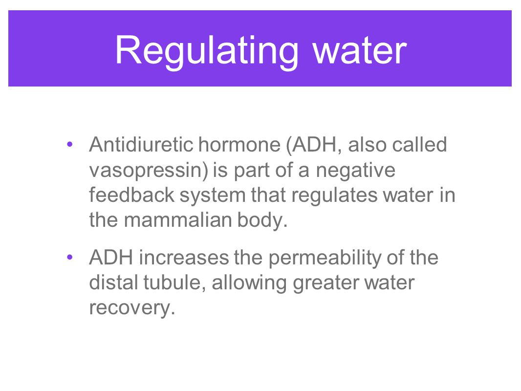 Regulating water Antidiuretic hormone (ADH, also called vasopressin) is part of a negative feedback system that regulates water in the mammalian body.