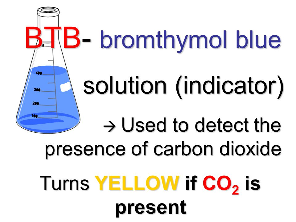 BTB- bromthymol blue solution (indicator) solution (indicator)  Used to detect the presence of carbon dioxide  Used to detect the presence of carbon dioxide Turns YELLOW if CO 2 is present