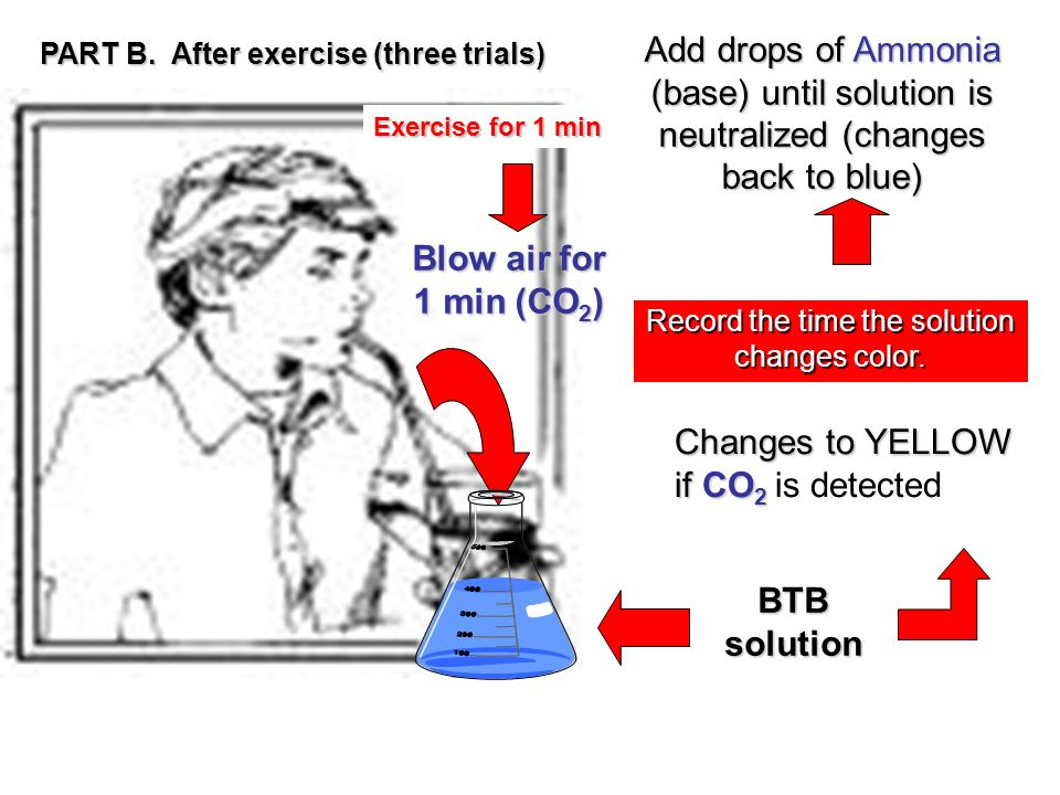Blow air for 1 min (CO 2 ) BTB solution Changes to YELLOW if CO 2 Changes to YELLOW if CO 2 is detected Record the time the solution changes color.