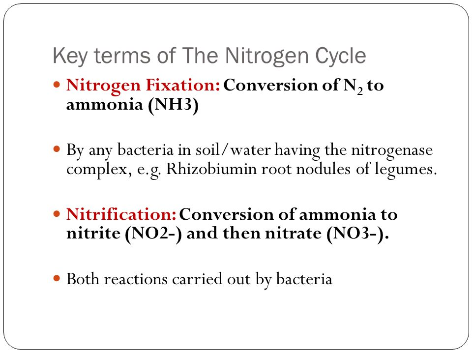 Assimilation: Conversion of NH3, NO2-,, NO3-( inorganic) into organic compounds (proteins, DNA, & other forms) All living cells (plants, animals, & bacteria).