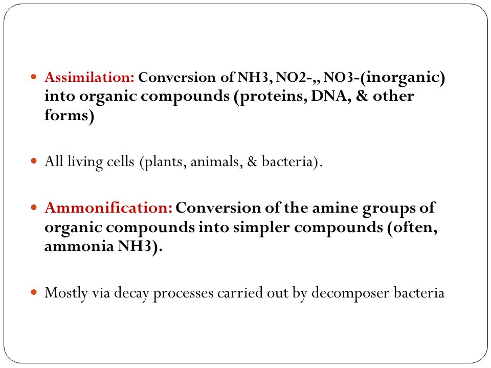 Denitrification: Conversion of NH3, NO2-,, NO3-to N2 Mostly by anaerobic bacteria in water logged soil, bottom sediments of lakes, swamps, bogs and oceans.