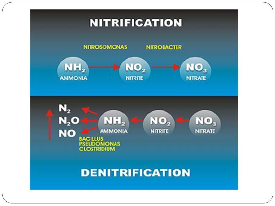 Nitrification Nitrification is the biological oxidation of ammonia with oxygen into nitrite followed by the oxidation of these nitrites into nitrates.