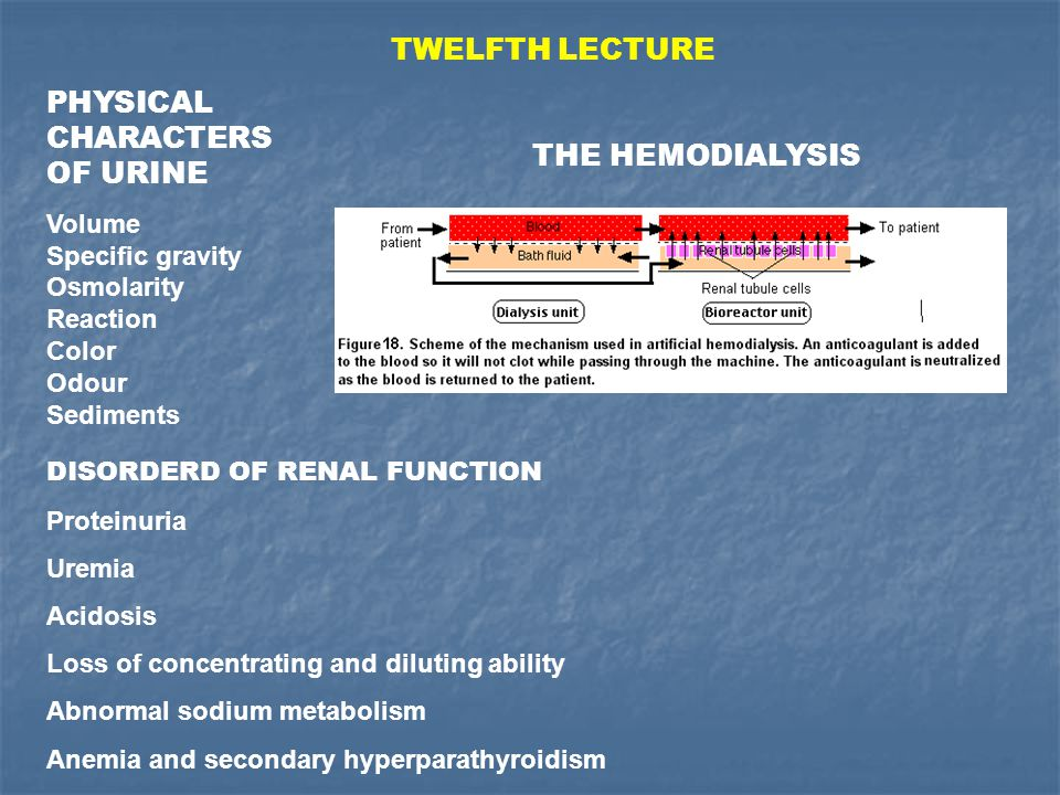 PHYSICAL CHARACTERS OF URINE Volume Specific gravity Osmolarity Reaction Color Odour Sediments DISORDERD OF RENAL FUNCTION Proteinuria Uremia Acidosis Loss of concentrating and diluting ability Abnormal sodium metabolism Anemia and secondary hyperparathyroidism TWELFTH LECTURE THE HEMODIALYSIS