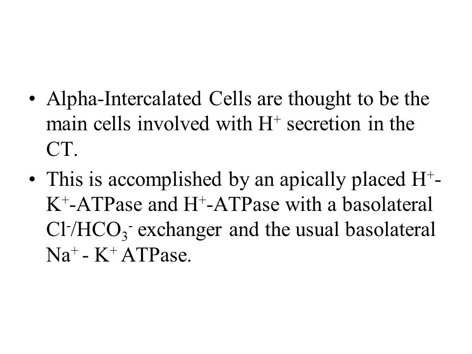 Alpha-Intercalated Cells are thought to be the main cells involved with H + secretion in the CT. This is accomplished by an apically placed H + - K +