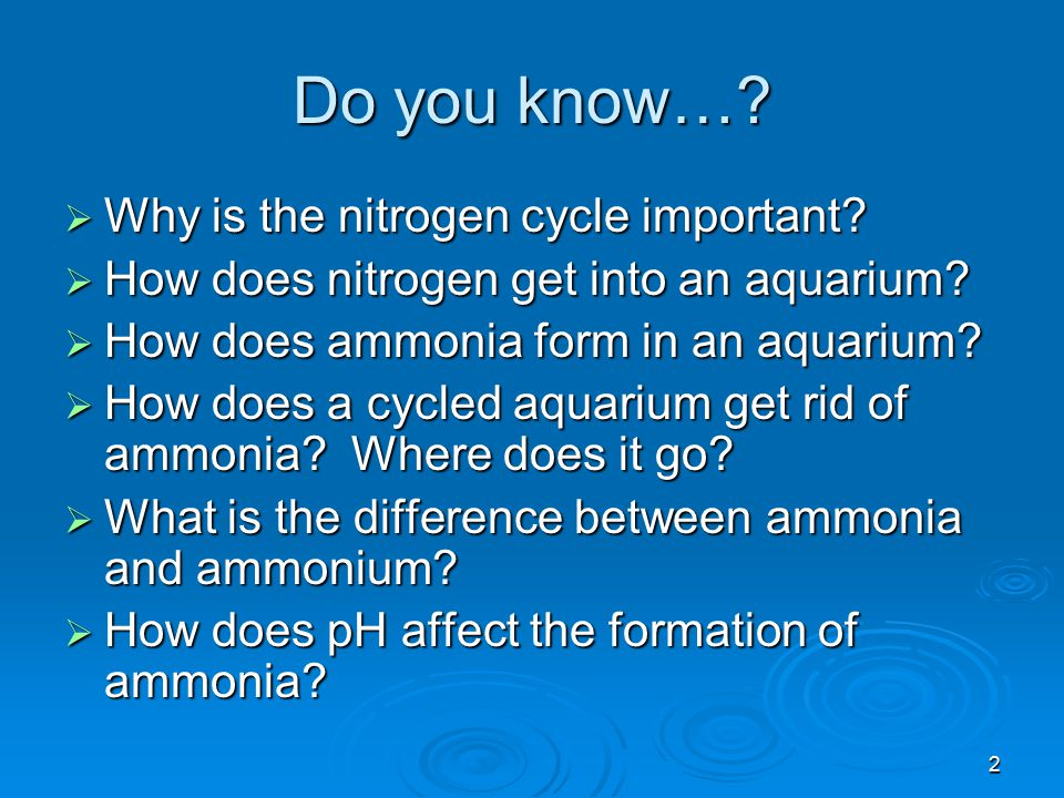 2 Do you know…?  Why is the nitrogen cycle important?  How does nitrogen get into an aquarium?  How does ammonia form in an aquarium?  How does a