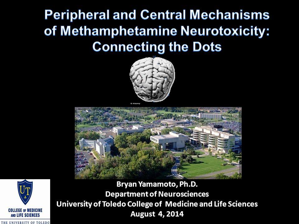 Ammonia Toxicity  Excitotoxicity (Fan and Szerb, 1993, Hermenegildo et al., 1996)  Oxidative stress ( Kosenko et al., 1997 and Kosenko et al., 1995)  Metabolic compromise (Hawkins et al., 1973, McCandless and Schenker, 1981)  Si milar mechanisms that mediate the toxicity to ammonia and the neurotoxicity to METH  Unknown whether peripheral organ (e.g.