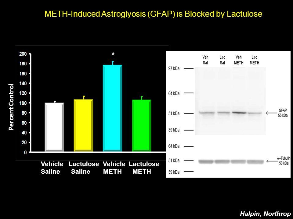 METH-Induced Astroglyosis (GFAP) is Blocked by Lactulose Vehicle Lactulose Saline Saline METH METH Percent Control * Halpin, Northrop