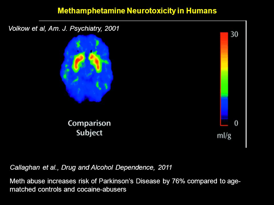 Overarching Hypothesis Liver Damage Hyperammonemia Methamphetamine Neurotoxicity Lactulose X