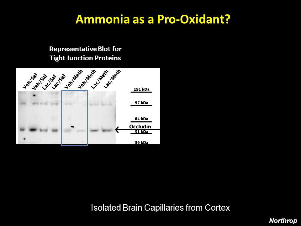 Representative Blot for Nitrotyrosine Ammonia as a Pro-Oxidant.