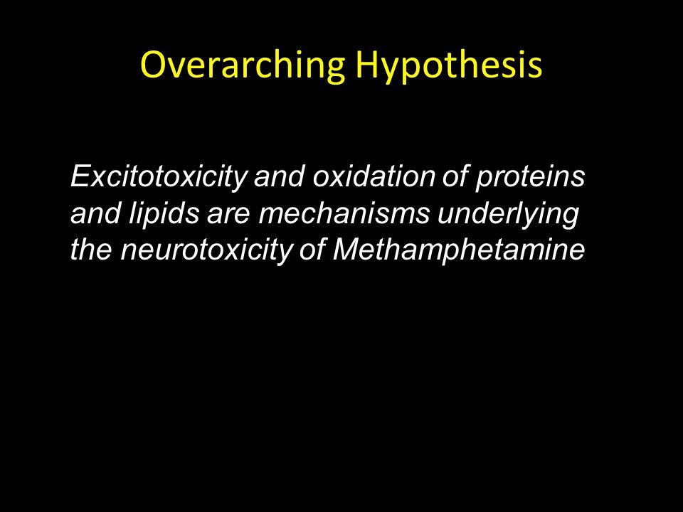 Saline Lactulose METH METH + Lactulose Plasma Ammonia (  M) * # Methamphetamine Increases Ammonia in Plasma Halpin