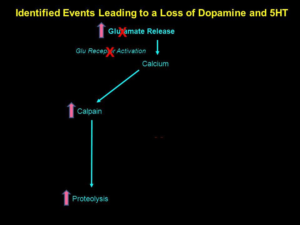 400 300 200 500 100 Methamphetamine Increases Ammonia in Striatum: Blocked by Lactulose Halpin