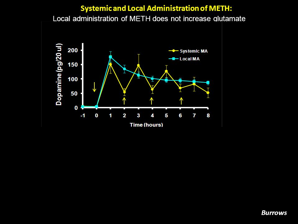 Dopamine (pg/  g protein) Without GlutamateWith Glutamate Glutamate Synergizes with Local METH To Deplete Dopamine Content No Meth Meth Meth/Heat No MethMeth Meth/Heat * # Burrows