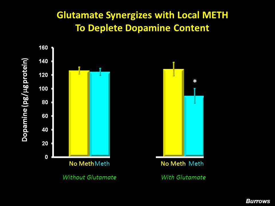 1.2 1.0 0.8 0.6 0.4 0.2 Vehicle Lactulose Saline METH Dopamine Transporter Immunoreactivity * % Control Lactulose Blocks METH-induced Decreases in Dopamine Transporter Immmunoreactivity Halpin