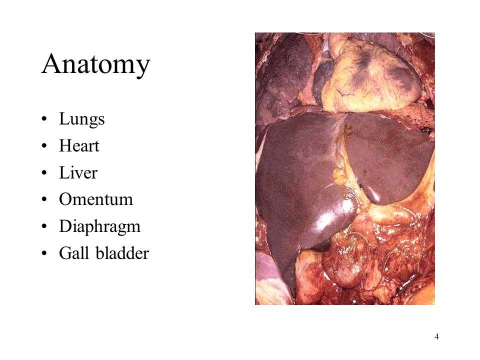 5 Structure of Liver Lobule