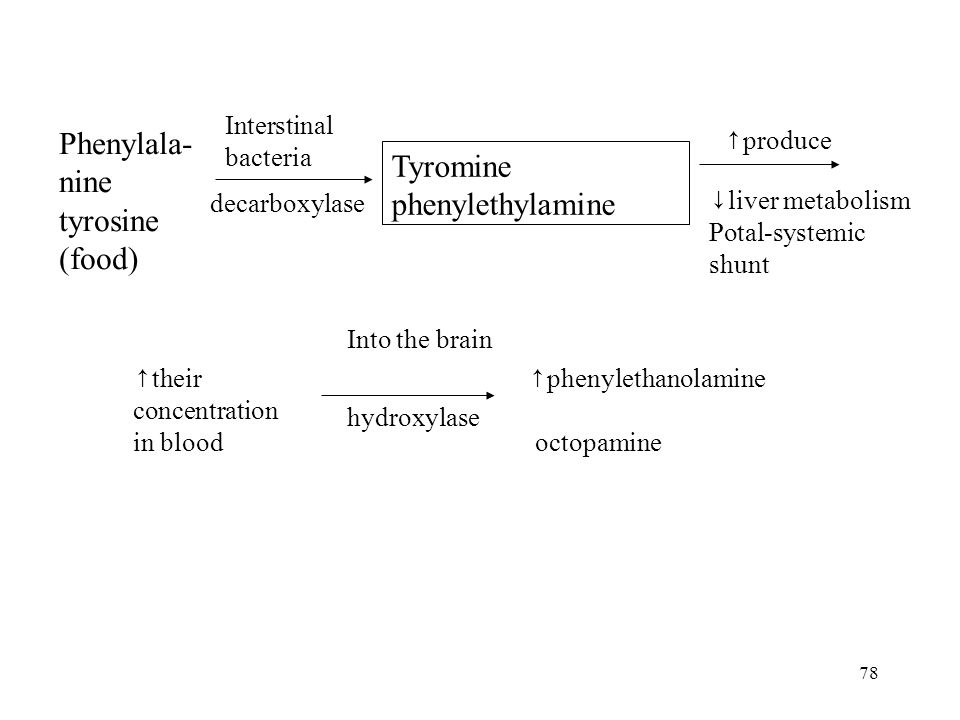 78 Interstinal bacteria decarboxylase Tyromine phenylethylamine ↑ their concentration in blood ↑ phenylethanolamine octopamine Into the brain hydroxylase ↑ produce ↓ liver metabolism Potal-systemic shunt Phenylala- nine tyrosine (food)