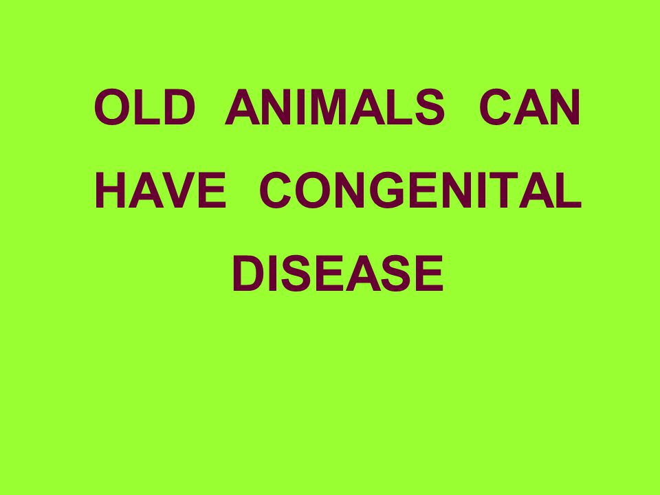 OLD ANIMALS CAN HAVE CONGENITAL DISEASE