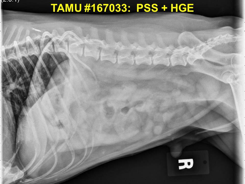 TAMU #167033: PSS + HGE