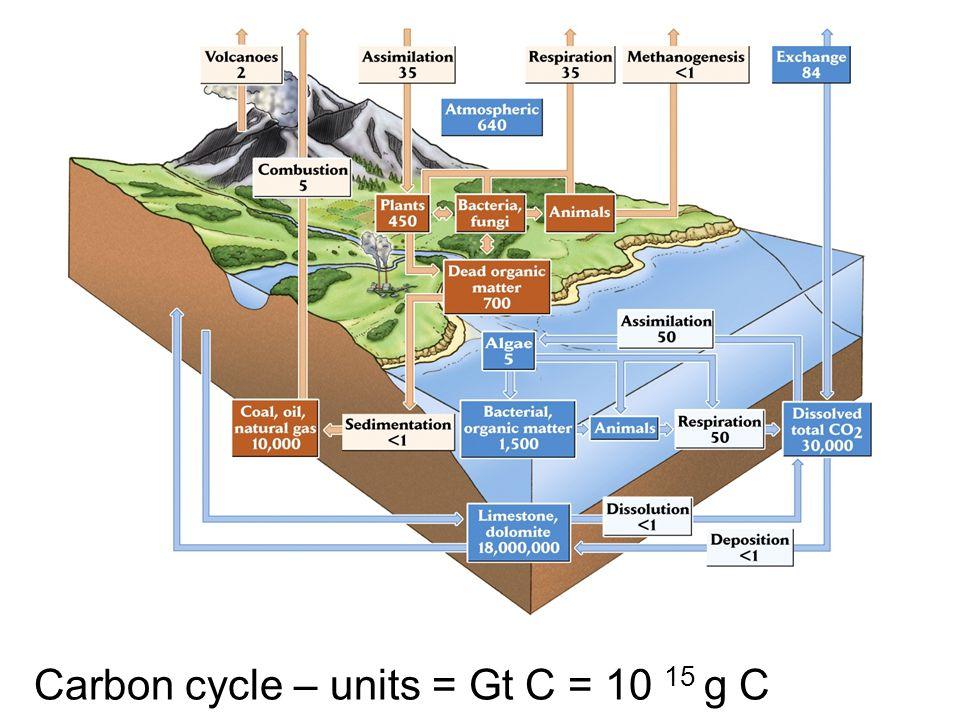 Carbon cycle – units = Gt C = 10 15 g C
