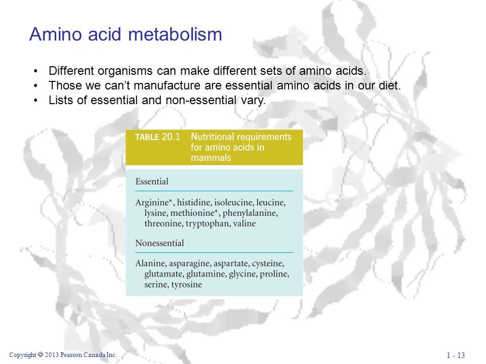 Amino acid metabolism Copyright  2013 Pearson Canada Inc.
