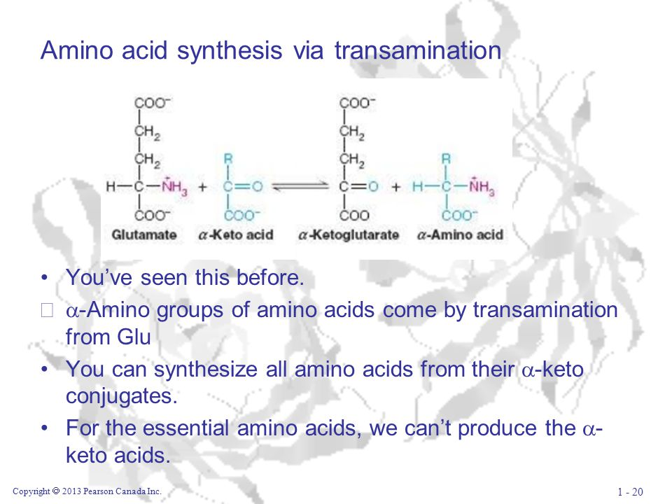 Amino acid synthesis via transamination You've seen this before.