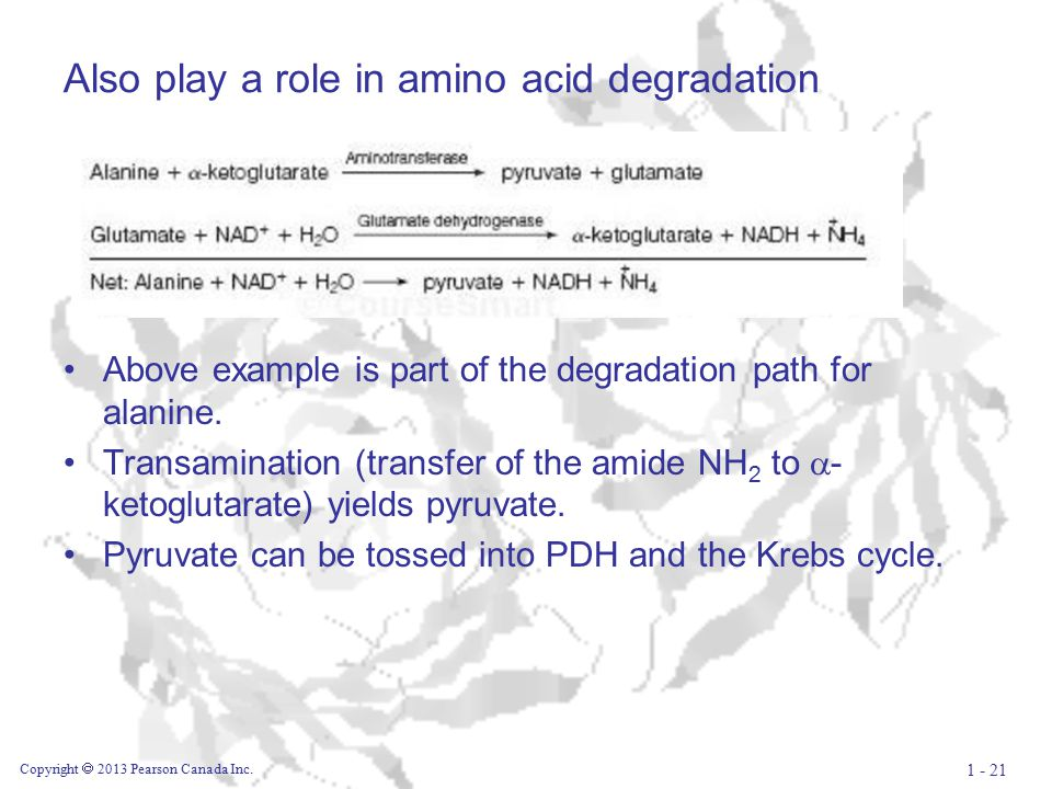 Also play a role in amino acid degradation Above example is part of the degradation path for alanine.