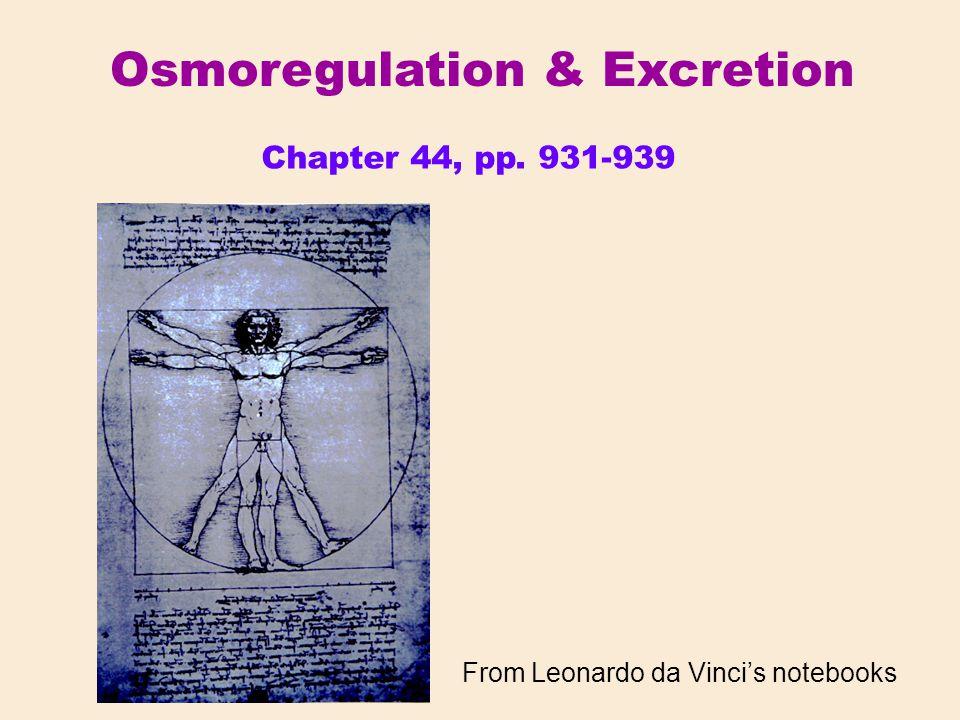 From Leonardo da Vinci's notebooks Chapter 44, pp. 931-939 Osmoregulation & Excretion