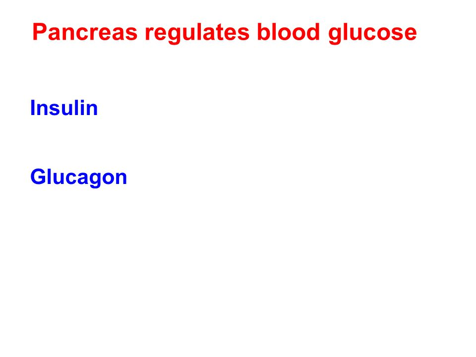 Pancreas regulates blood glucose Insulin – decrease blood glucose stimulates uptake by cells – use it or store it as fat and glycogen Glucagon increas