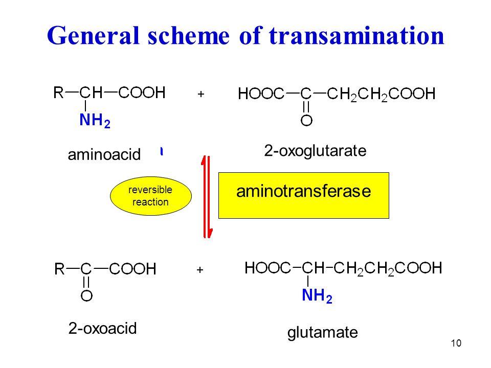 10 General scheme of transamination glutamate 2-oxoacid aminoacid 2-oxoglutarate aminotransferase reversible reaction