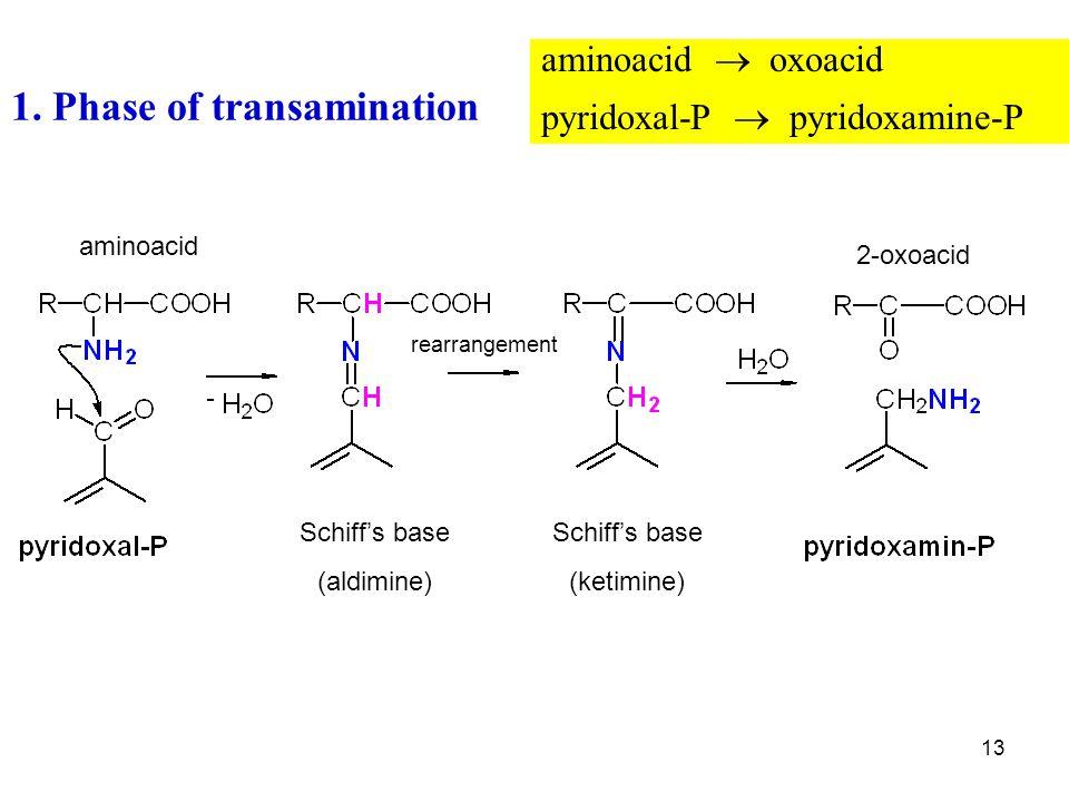 13 1. Phase of transamination aminoacid  oxoacid pyridoxal-P  pyridoxamine-P 2-oxoacid aminoacid Schiff's base (aldimine) Schiff's base (ketimine) r