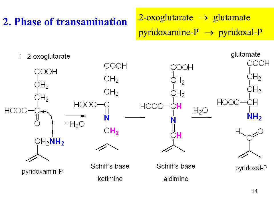 14 2. Phase of transamination 2-oxoglutarate  glutamate pyridoxamine-P  pyridoxal-P glutamate 2-oxoglutarate Schiff's base aldimine Schiff's base ke