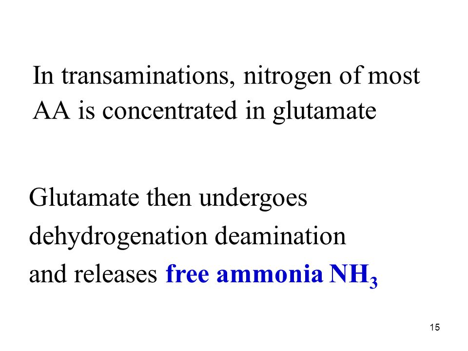 15 In transaminations, nitrogen of most AA is concentrated in glutamate Glutamate then undergoes dehydrogenation deamination and releases free ammonia