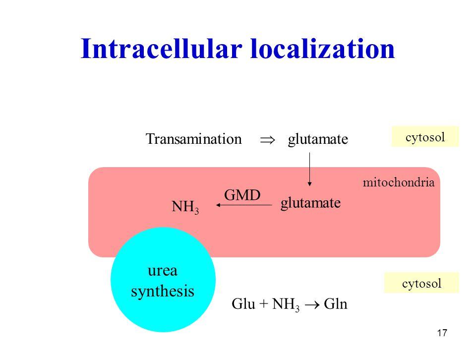 17 Intracellular localization Transamination  glutamate NH 3 glutamate urea synthesis mitochondria cytosol GMD Glu + NH 3  Gln