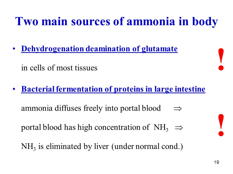 19 Dehydrogenation deamination of glutamate in cells of most tissues Bacterial fermentation of proteins in large intestine ammonia diffuses freely int