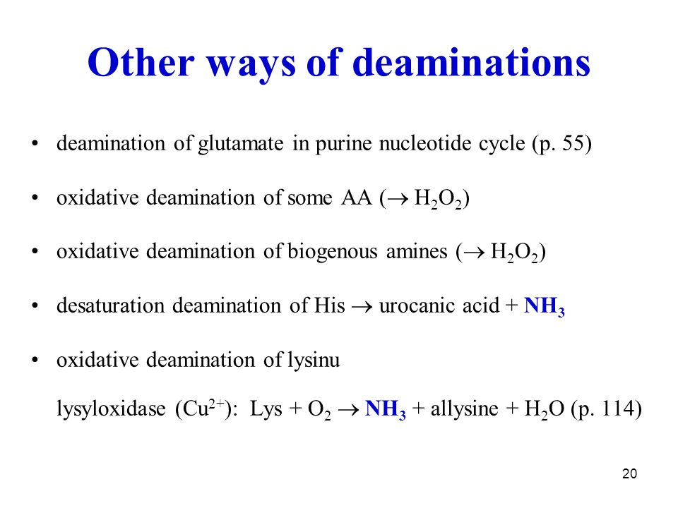 20 Other ways of deaminations deamination of glutamate in purine nucleotide cycle (p. 55) oxidative deamination of some AA (  H 2 O 2 ) oxidative dea
