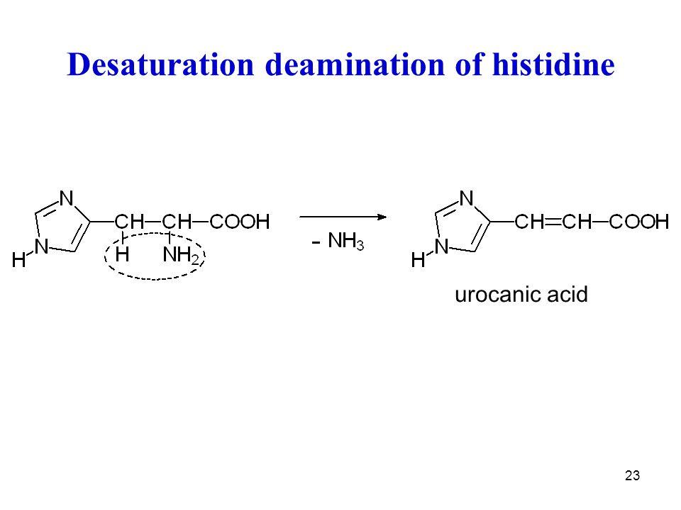 23 Desaturation deamination of histidine urocanic acid