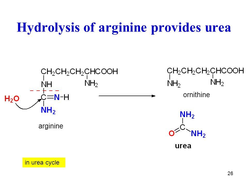 26 Hydrolysis of arginine provides urea in urea cycle arginine ornithine