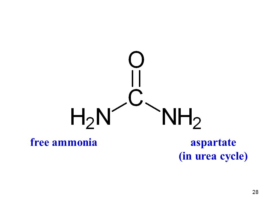 28 free ammoniaaspartate (in urea cycle)