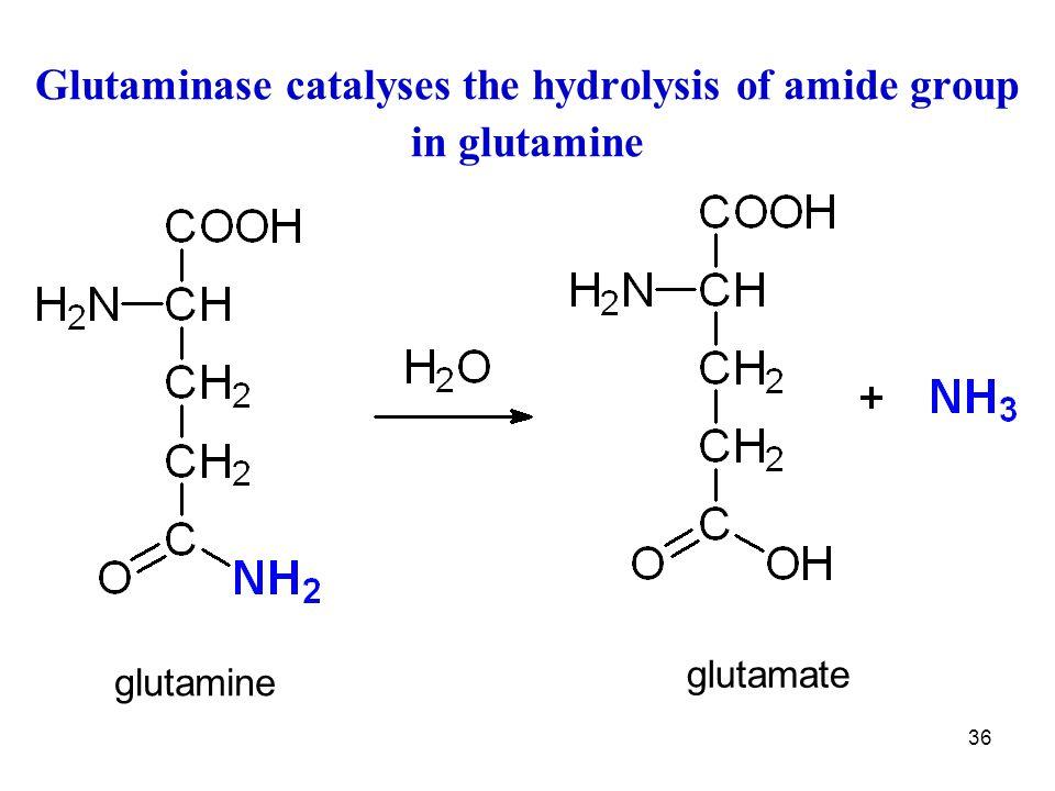 36 Glutaminase catalyses the hydrolysis of amide group in glutamine glutamate glutamine