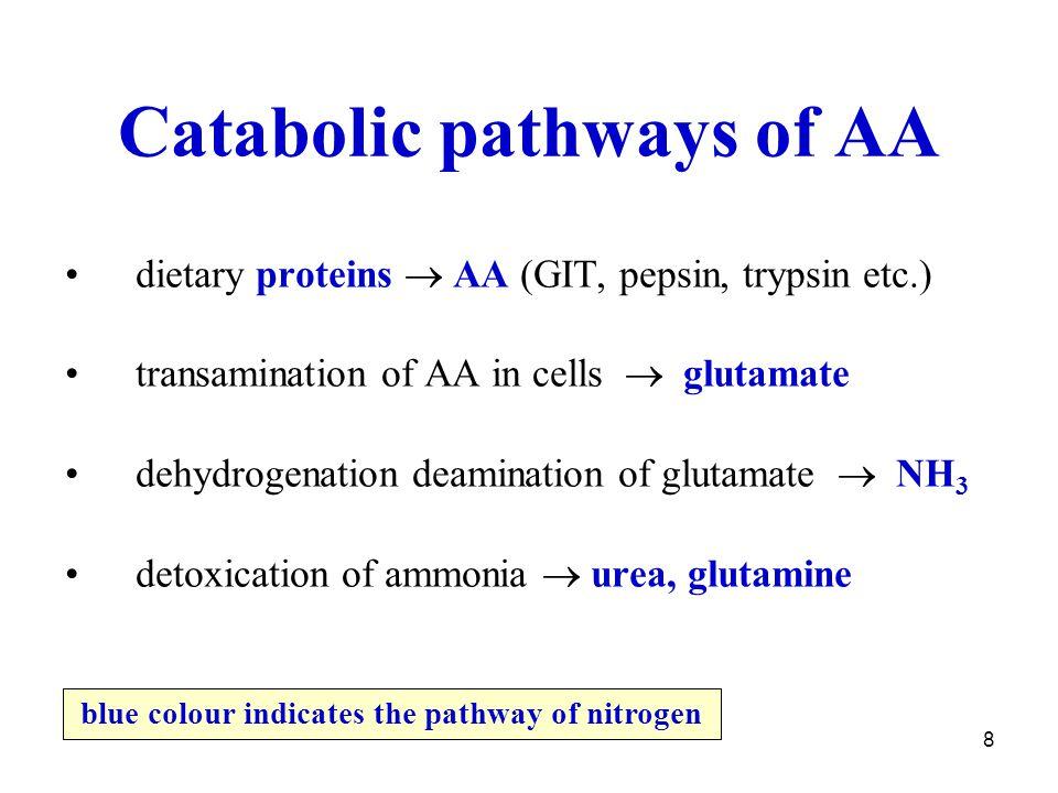 8 Catabolic pathways of AA dietary proteins  AA (GIT, pepsin, trypsin etc.) transamination of AA in cells  glutamate dehydrogenation deamination of