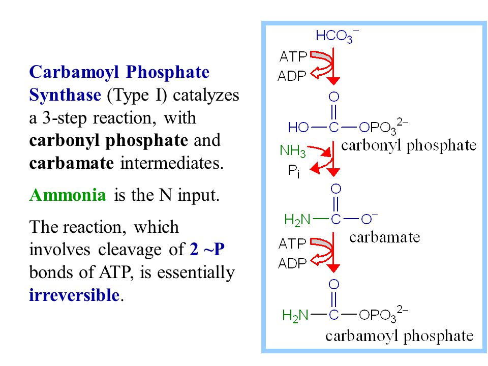 Carbamoyl Phosphate Synthase (Type I) catalyzes a 3-step reaction, with carbonyl phosphate and carbamate intermediates.