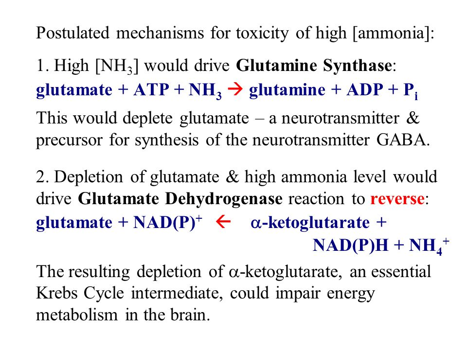 Postulated mechanisms for toxicity of high [ammonia]: 1.