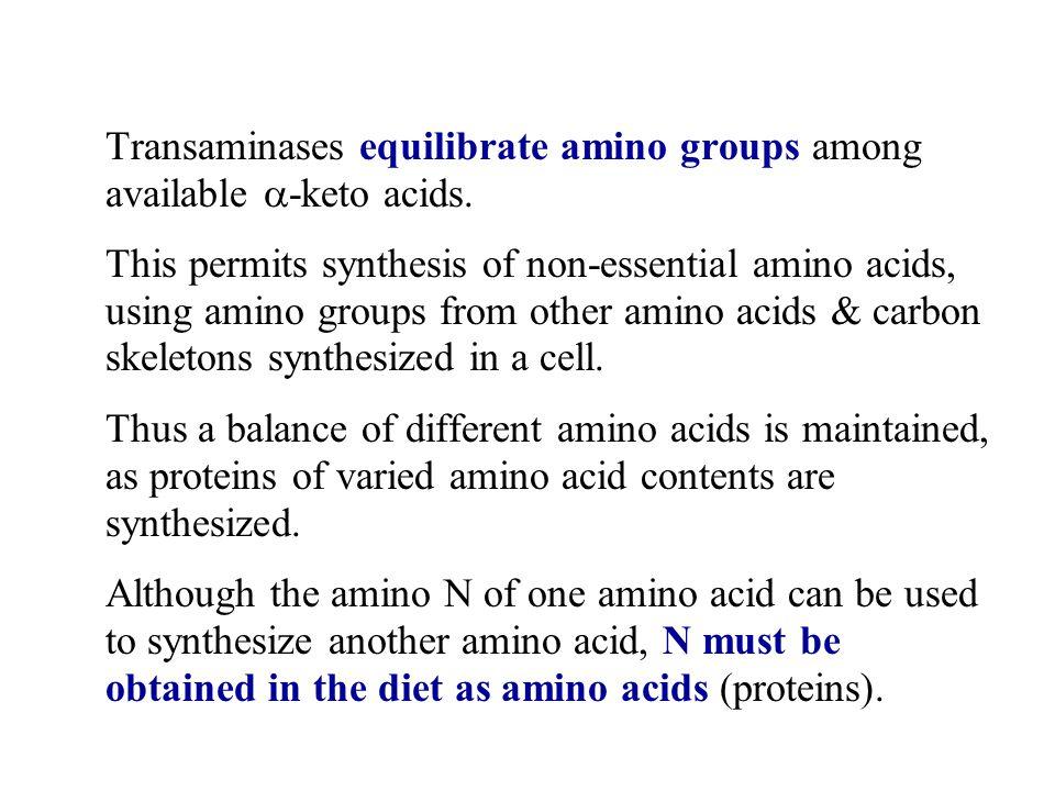 Transaminases equilibrate amino groups among available  -keto acids.