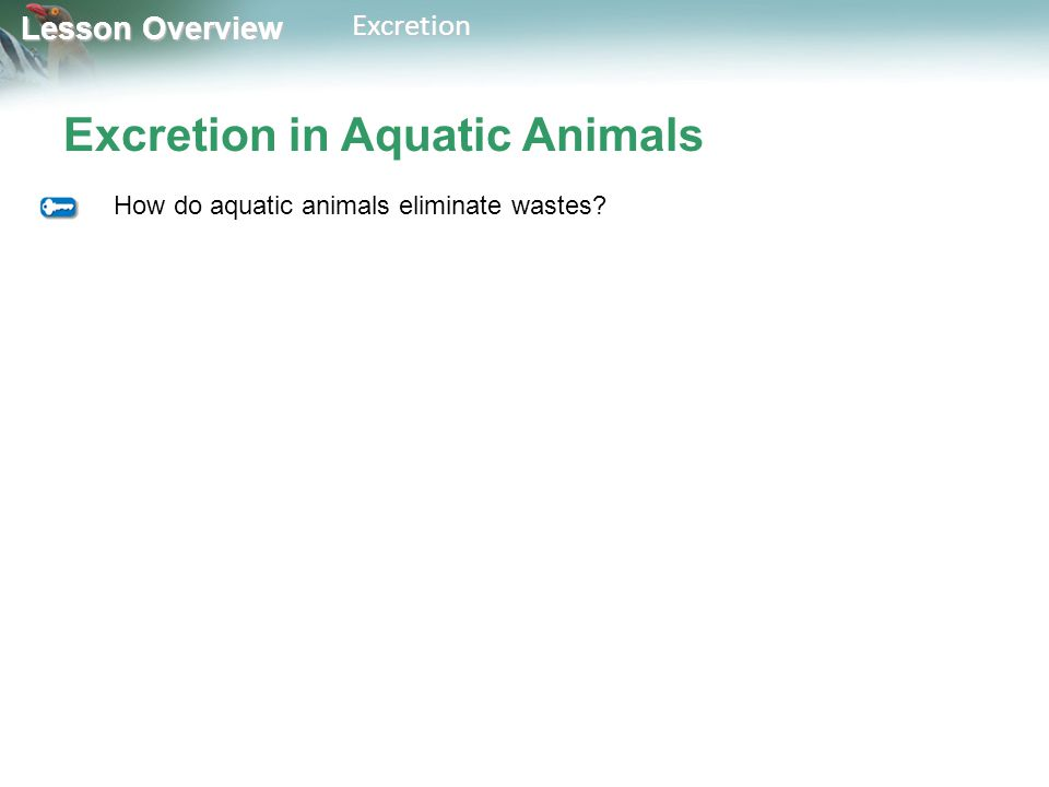 Lesson Overview Lesson OverviewExcretion Excretion in Aquatic Animals How do aquatic animals eliminate wastes?